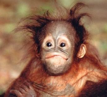"Картинки по запросу ""обезьяна"""""